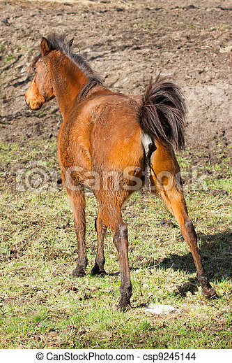 Horse peeing - csp9245144