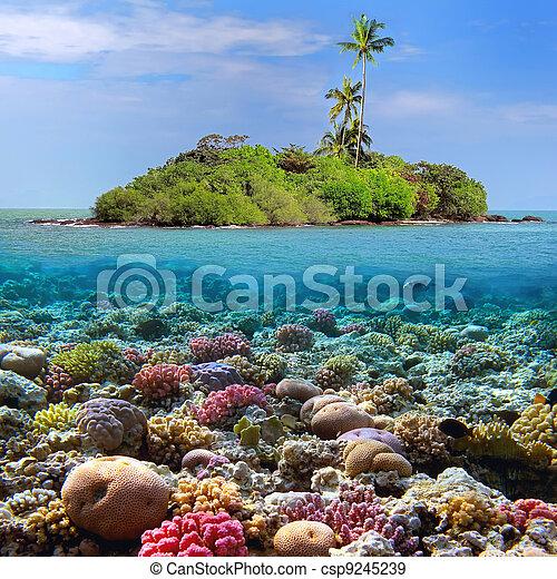 Coral island - csp9245239