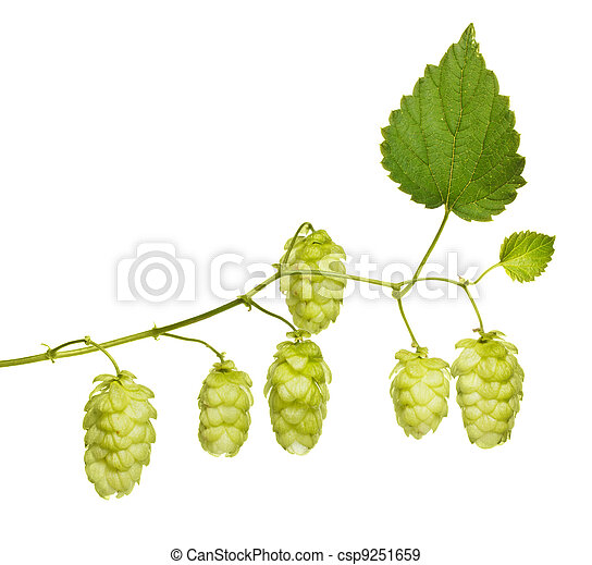 hop branch isolated on white - csp9251659