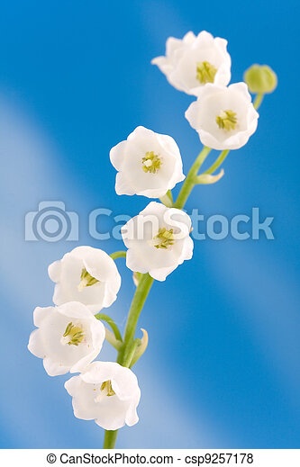 Lily of the valley - csp9257178