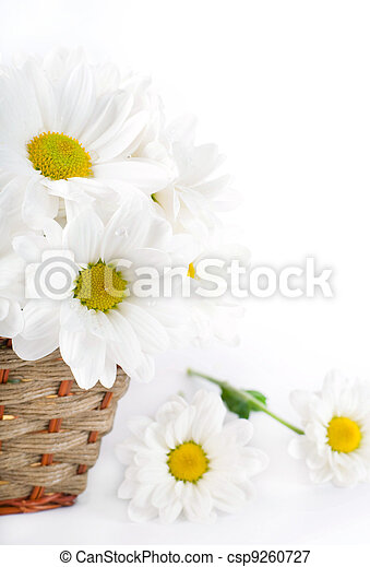 White flowers, field camomiles in a braided basket - csp9260727