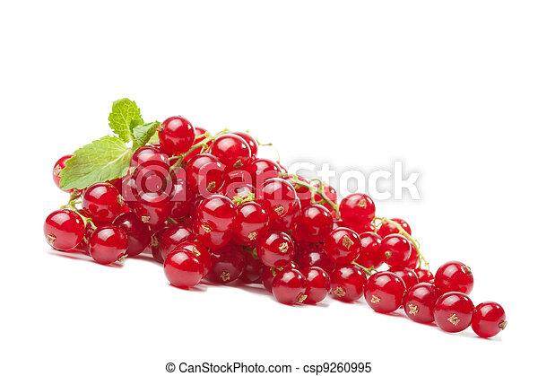 redcurrant berries isolated - csp9260995