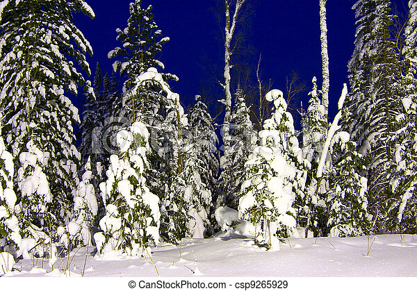 nightly landscape of snow-bound fir-trees - csp9265929