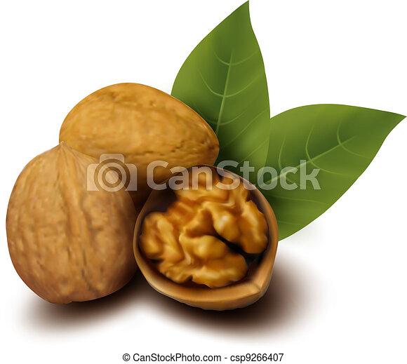 Walnuts and a cracked walnut  - csp9266407