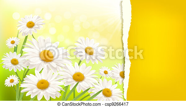Nature background with fresh daisy  - csp9266417