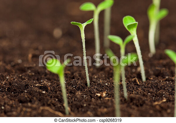 Green seedling - csp9268319