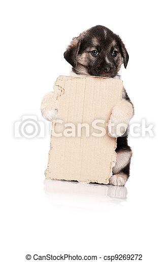 Puppy with paper - csp9269272