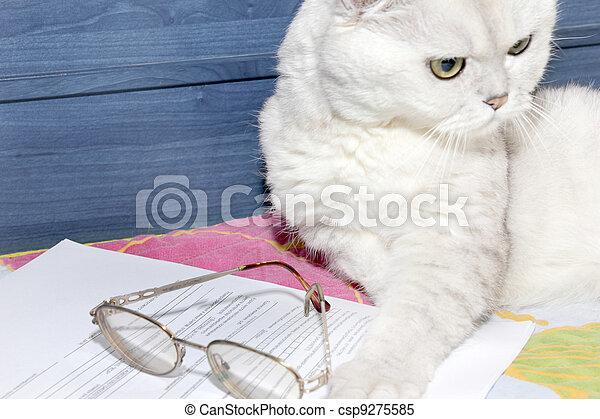 pedigreed cat - csp9275585