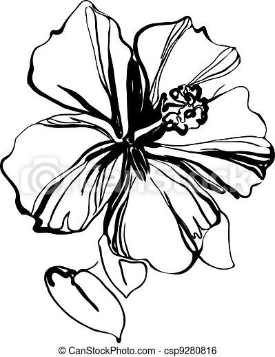 Hibiscus Illustrations and Clip Art. 5,997 Hibiscus royalty free ...
