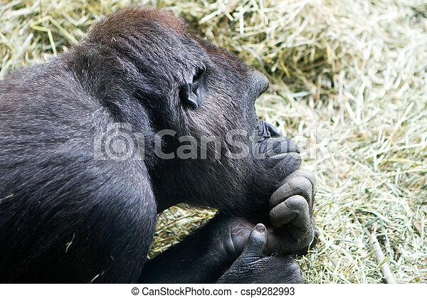 Pondering Monkey - csp9282993