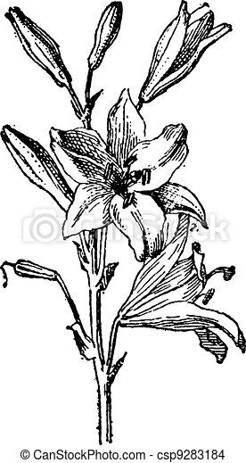 Floral Ornament Vector Free Download 27056 as well Lilien Tattoo 957663343846 in addition Desenhos Para Pintura Em Telas Temas Para Colorir E Pintar Em Tela likewise Tatuajes De Estrellas Disenos Y Significado moreover Nero Silhouette Calla Gigli 19863936. on flower calla lily