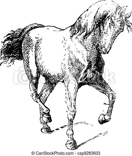 Horse Training, vintage engraving - csp9283603
