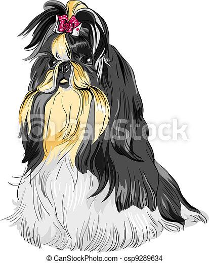 vector sketch dog Shih Tzu breed - csp9289634