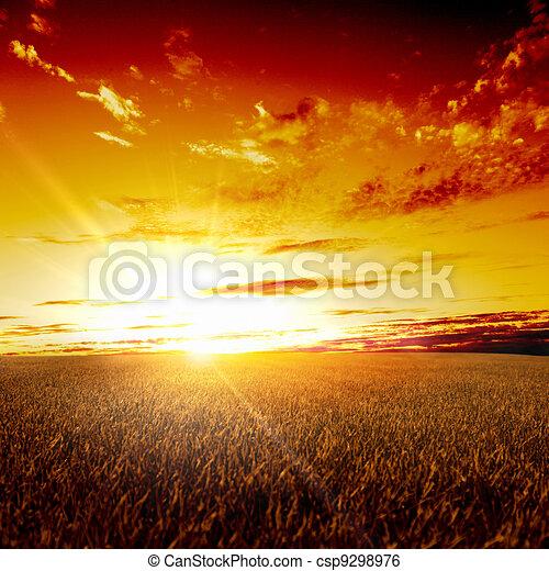 Rural landscape and shining sun - csp9298976