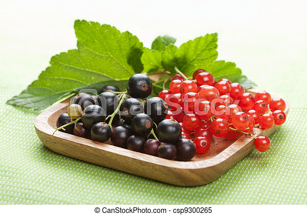 blackcurrant and redcurrant - csp9300265