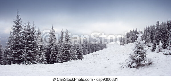 hiver, Arbres - csp9300881