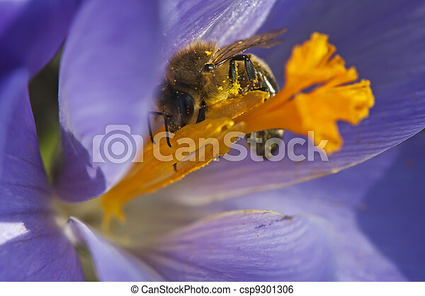 Bee Collecting Nectar - csp9301306