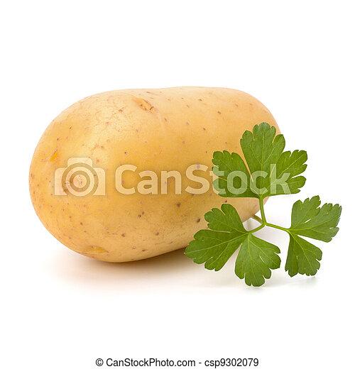 New potato isolated on white background close up - csp9302079