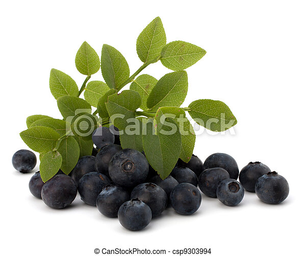 Blue bilberry or whortleberry  - csp9303994