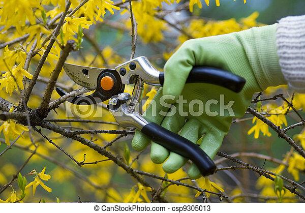 pruning shrubs  - csp9305013