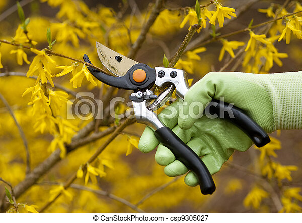 pruning shrubs - csp9305027