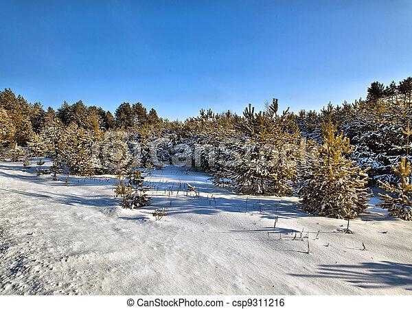Solar winter day in wood, Belarus - csp9311216