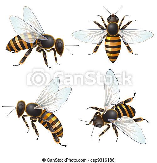 Set of bee - csp9316186