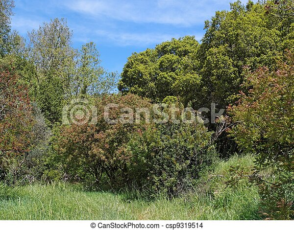 Small clearing in the Mediterranean forest in bright spring day - csp9319514