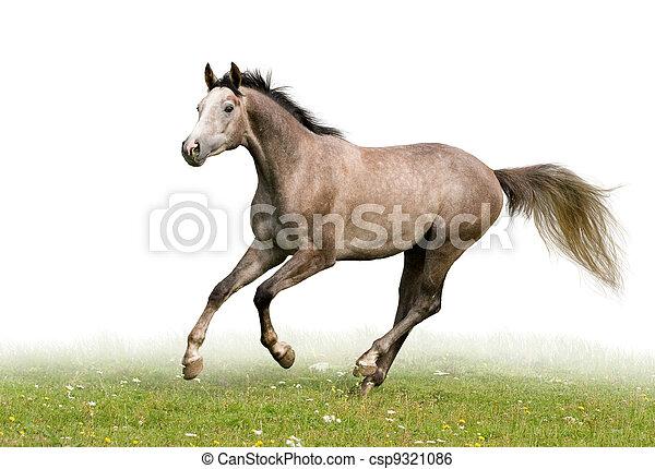 Grey horse isolated on white - csp9321086
