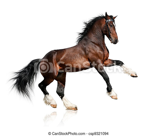 Bay horse isolated on white - csp9321094