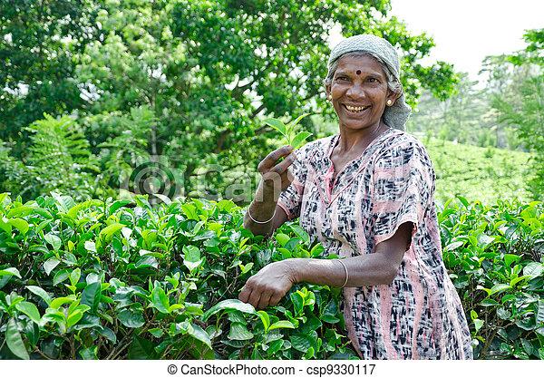 NEAR MOUNT PIDURUTALAGALA, SRI LANKA, DECEMBER 8, 2011. Tea pickers working on tea plantations near Mount Pidurutalagala, Sri Lanka, December 8, 2011. - csp9330117