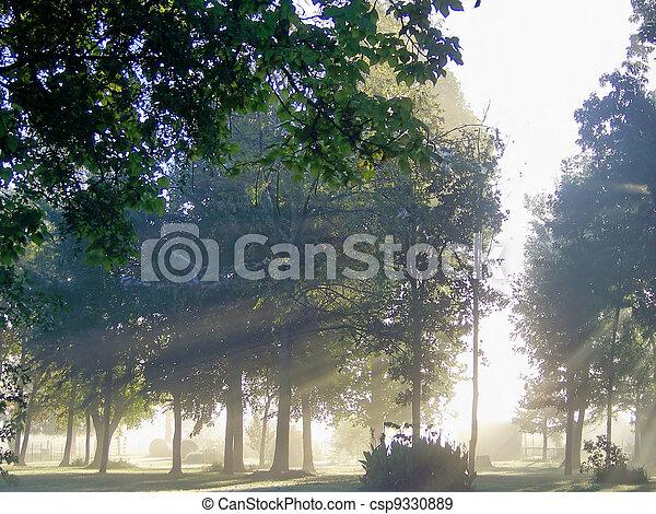 Sunshine Through The Fog - csp9330889