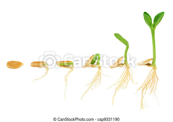 Sequence of pumpkin plant growing isolated, evolution concept - csp9331190