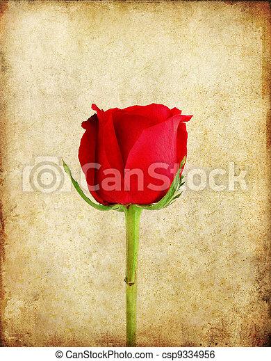 altes , rose, papier, hintergrund, grunge, rotes  - csp9334956
