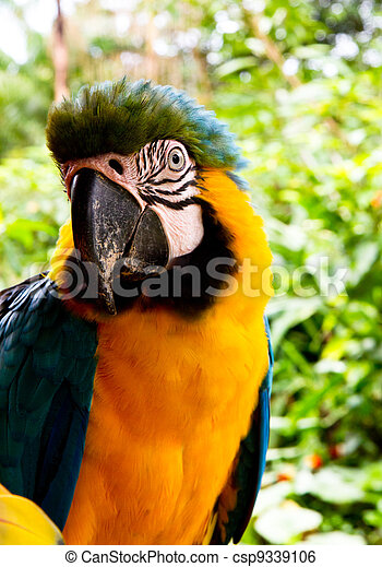 Blue and yellow Macaw - csp9339106
