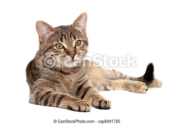Tabby cat lying on white - csp9341725