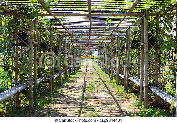 Photographies de bambou tunnel jardin couvert courge for Jardin couvert lyon