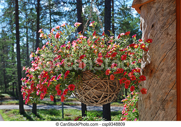 Hanging flowerpot with petunia on the large trunk chapped. - csp9348809