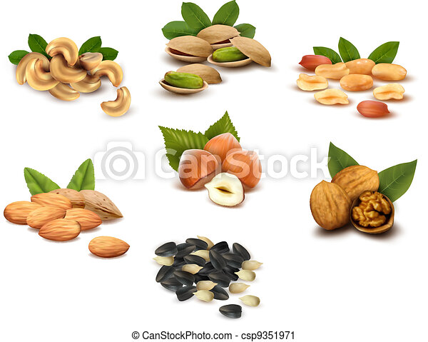 Big collection of ripe nuts  Vector - csp9351971