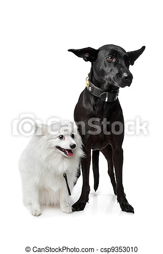 Keeshond (Dutch Barge Dog) and a black Shepherd - csp9353010