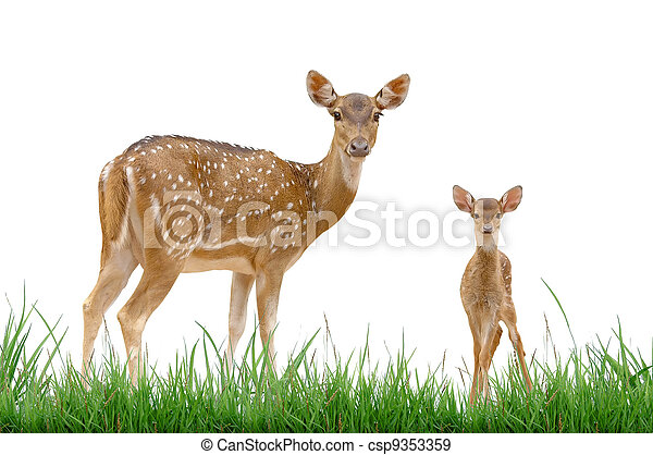 axis deer with green grass isolated - csp9353359
