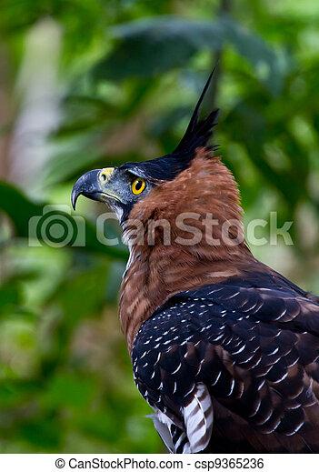 Bird of prey side  - csp9365236