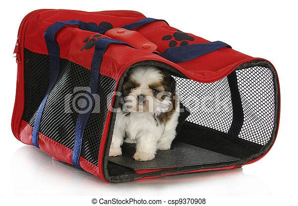 puppy carrier - csp9370908