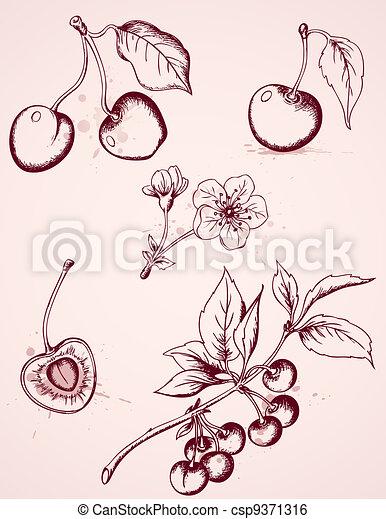 hand drawn vintage cherry - csp9371316
