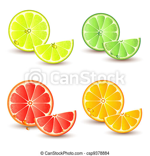 Set of citrus fruit - csp9378884