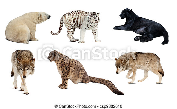 集合, carnivora, 在上方, 被隔离, mammal., 白色 - csp9382610