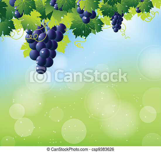 green wine and bunch of blue grapes - csp9383626
