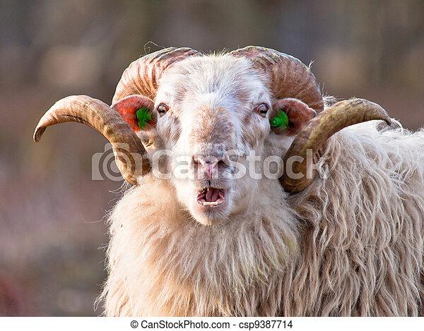 ridiculous sheep - csp9387714