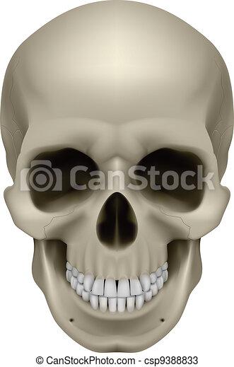 Human skull - csp9388833