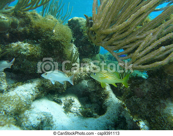 Flora and Fauna of Caribbean Sea - csp9391113